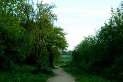 A Picture of Tongham Wood